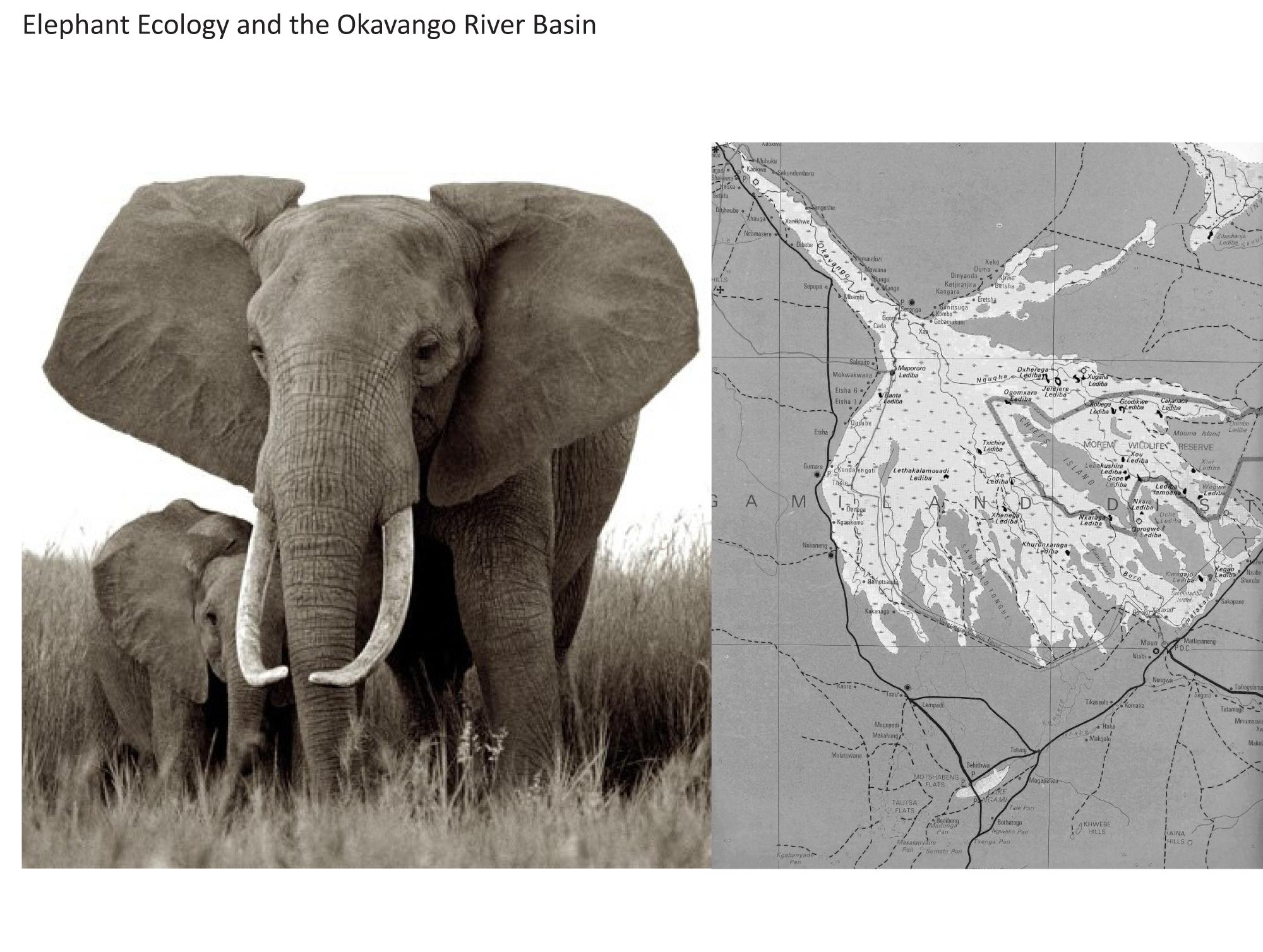Elephant Ecology